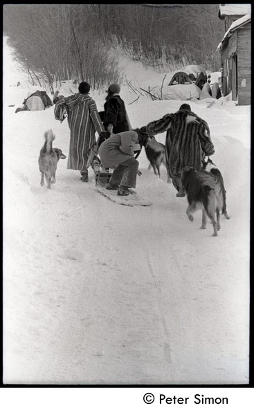 Fritz Hewitt, Catherine Blinder, unidentified man, and Marcia Braun (l. to r.) walking             through the snow with dogs, Tree Frog Farm commune, 1970