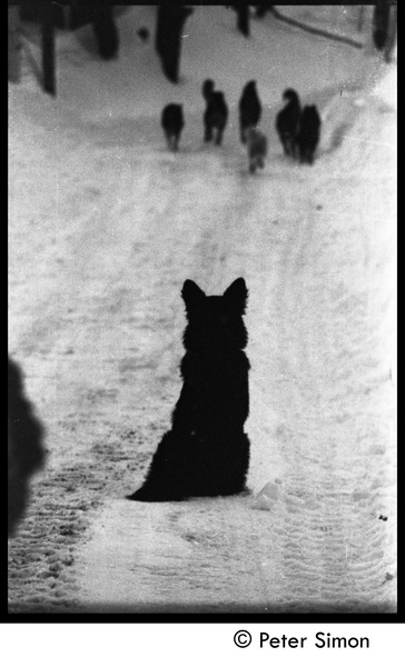 Commune dogs on a snowy road, Tree Frog Farm commune, 1970