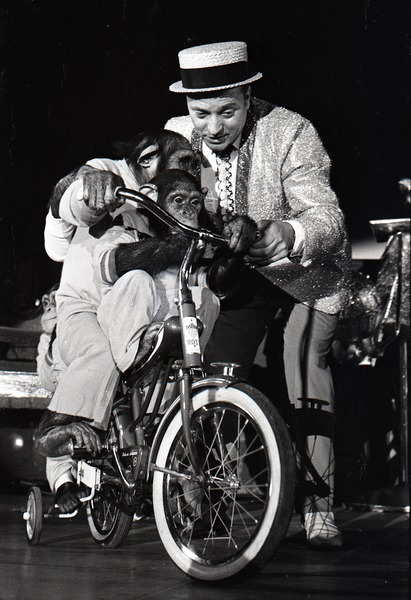 Chimpanzee vaudeville act opening for the Grateful Dead at Sargent Gym, Boston University: performer with pork-pie hat and chimpanzees on bicycles, November 21, 1970