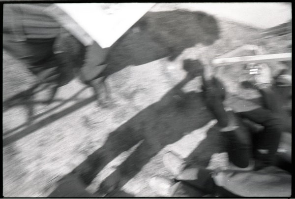 May Day concert at West Potomac Park: accidental shot of photographer's shadow, May 1, 1971