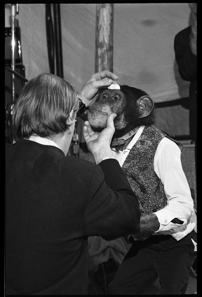 Performing chimpanzee, dressed up in costume, with handler, ca. May 1972