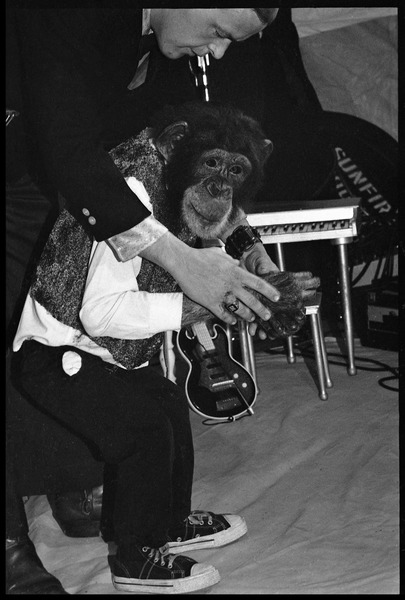 Performing chimpanzee, dressed up in costume, with handler , ca. May 1972
