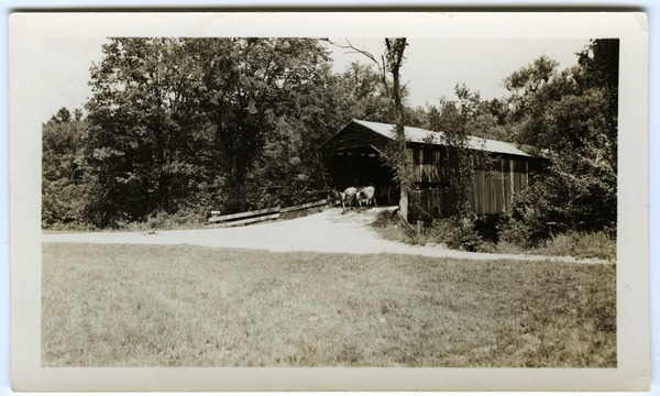 Covered bridge with ox team, ca. 1930