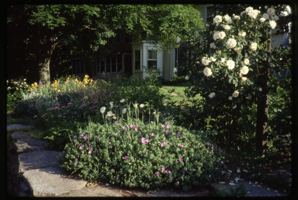 Flower plantings behind the stone wall in front of the house, Montague Farm Commune, ca. June 1993