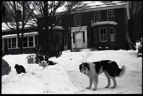 Cat and two dogs in heavy snow in front of the house, Montague Farm commune, ca. 1974