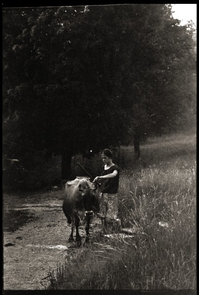 Susan Mareneck Leading The Cow Outside Barn Montague Farm Commune Ca 1974