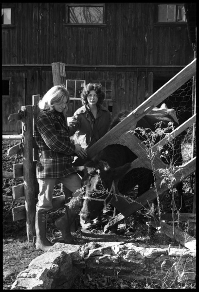 Janice Frey (left) and Nina Keller with cow, Montague Farm commune, ca. 1974