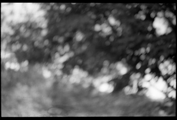 Blurred view of trees, Montague Farm commune, ca. 1969