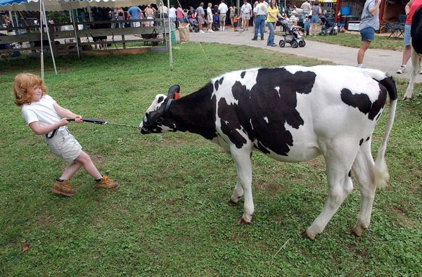 Forty-eight-pound Brittany Ornberg, 6, Westerly, tries to coax her family's