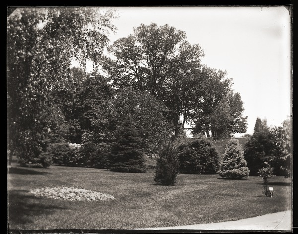 Plantings on the grounds of Massachusetts Agricultural College, ca. 1894