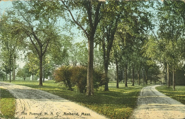 The  Avenue, M.A.C., Amherst, Mass., ca. 1915